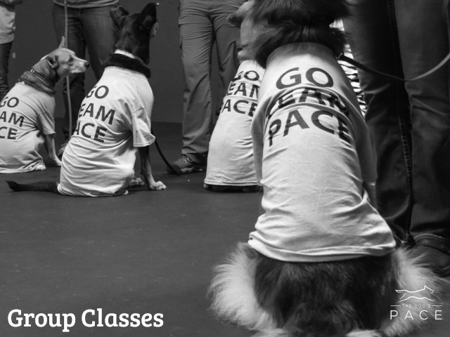 Group Nosework Classes in Franklin, MA