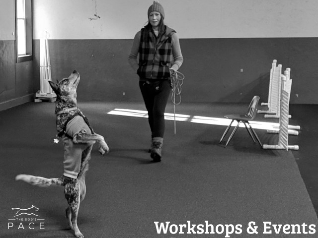 Nosework Workshops & Events in Franklin, MA