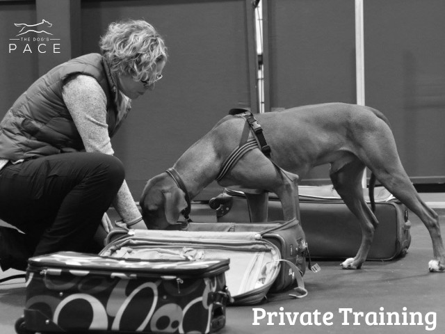 Private Nosework Training in Franklin, MA